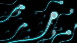 Chất lượng tinh binh ảnh hưởng đến sức khỏe sinh sản ở quý ông
