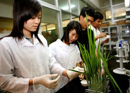 Sinh viên tốt nghiệp ngành Công nghệ sinh học có thể đảm nhiệm nhiều vị trí công việc khác nhau